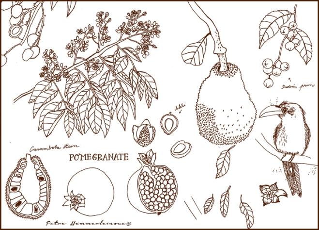 Tropical garden sketches by Petra Hämmerleinova